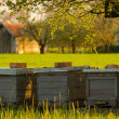 Stock Photo: Bee hives outdoor on sunny spring day