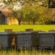Bee hives outdoor on sunny spring day - Stock Photo