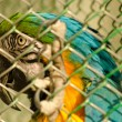 Beautiful parrot in captivity — Stock Photo #25042037