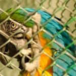 Beautiful parrot in captivity — Stock Photo