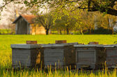 Bee hives outdoor on sunny spring day — Stock Photo