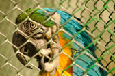 Beautiful parrot in captivity — Stock Photo