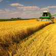 Stock Photo: Combine harvester working on the wheat field