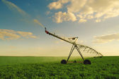 Irrigation system watering field of peas — Stock Photo