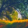 Landscape painting - crooked tree in the forest — Stock Photo