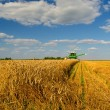 Combine harvester harvesting wheat — Stock Photo