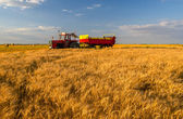 Tractor with trailer passing by wheat field — Stock Photo
