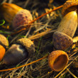 Acorns on the ground in autumn — Stock Photo