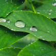 Water drops on leaves — Stock Photo #32362163