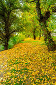 Landscape painting - forest in autumn — Stock Photo