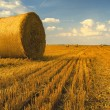 Hay bales on the field — Stock Photo #34900233