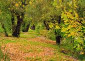 Landscape painting - autumn forest — Stock Photo