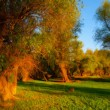 Landscape painting - autumn forest — Stockfoto #37861649