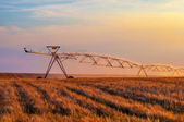 Irrigation system on the wheat field — Stock Photo