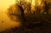 Landscape painting - creepy forest on river shore — Stock Photo