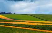 Agricultural fields on cloudy day — Stock Photo