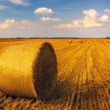 Hay bales on the wheat field — Stock Photo