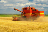 Harvester combine harvesting wheat — Stock Photo