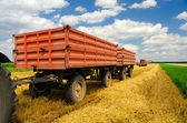 Harvester combine and tractor trailers during wheat harvest — Stock Photo