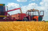 Harvester combine, tractor and trailers during wheat harvest — Stock Photo