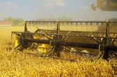 Harvester combine harvesting wheat — Zdjęcie stockowe