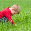 Cute little boy exploring the nature — Stock Photo #49504199