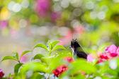 Hiden bird — Stock Photo