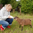 Woman feeding young sheep — Stock Photo