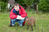 Man feeding young sheep — Stock Photo
