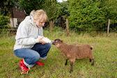 Woman feeding young sheep — Stock Photo