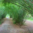 Bamboo tunnel — Stock Photo