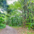 Wide path in rainforest — Stock Photo