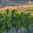 Vineyards in Tuscany — Stock Photo