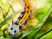 Caterpillars — Stock Photo