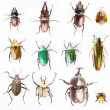 Insects collections — Stock Photo