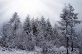 Winter wood — Stock Photo