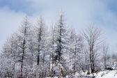 Winter wood — Stockfoto
