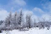 Drewno zimowe — Zdjęcie stockowe