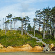 A Wooden Staircase Leading Down a Wooded Hillside to the Beach — Stock Photo