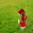 Ripe Red Cherries Stacked in a Mini Wine Glass — Stock Photo #15703313