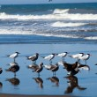 A Variety of Seabirds at the Seashore — Stock Photo