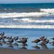 Variety of Seabirds at Seashore — Stock Photo #18634381