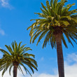 Two Palm Trees Before a Clear Blue Sky — Stock Photo