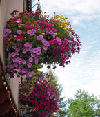Flowers Adorning the Streets of Leavenworth WA USA — Stock Photo