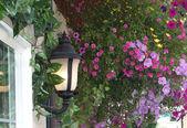 Flowers Adorning the Streets of Leavenworth WA USA — Stock Photo
