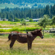 Horses in a Fenced Field with Mountains in the Background — Stock Photo