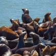 Sea Lions at Pier 39 at San Francisco — Stock Photo