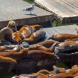 Sea Lions at Pier 39 at San Francisco — Stock Photo #29344993