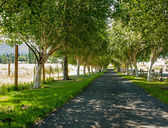 A Tree Lined Path — Stock Photo
