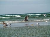 Seabirds on the Beach — Stock Photo